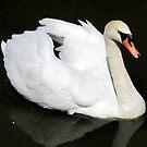 swan I by Leeanne Middleton