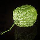 Bitter Melon by RandiScott