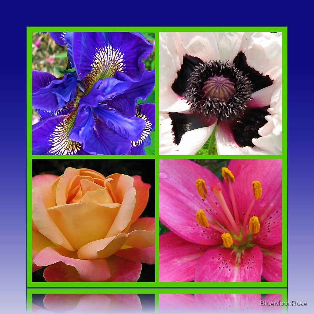 Peace Rose, Ruffled Poppy, Iris and Lily Collage von BlueMoonRose