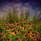 Black Eyed Susans and Zebra Grass by Christine Annas