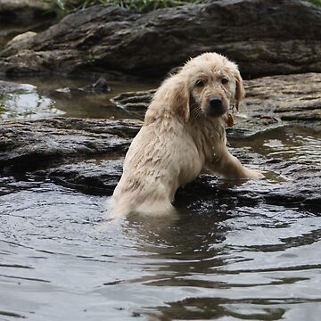 Ok I Swam Across, Now What Do I DO? - Brutus- 10 by goldnzrule