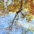 Reflecting On Monet by AngieDavies