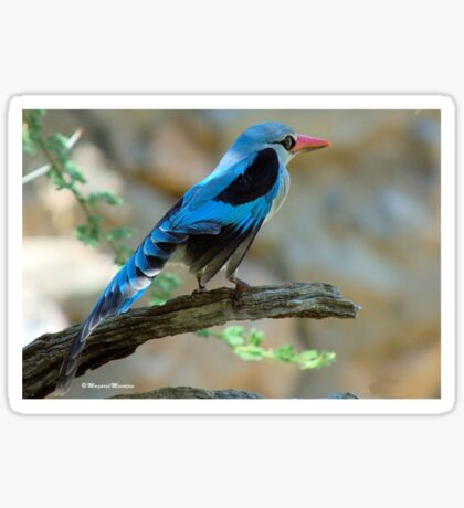 WOODLANDS KINGFISHER – Halcyon senegalensis - 	BOSVELDVISVANGER Sticker