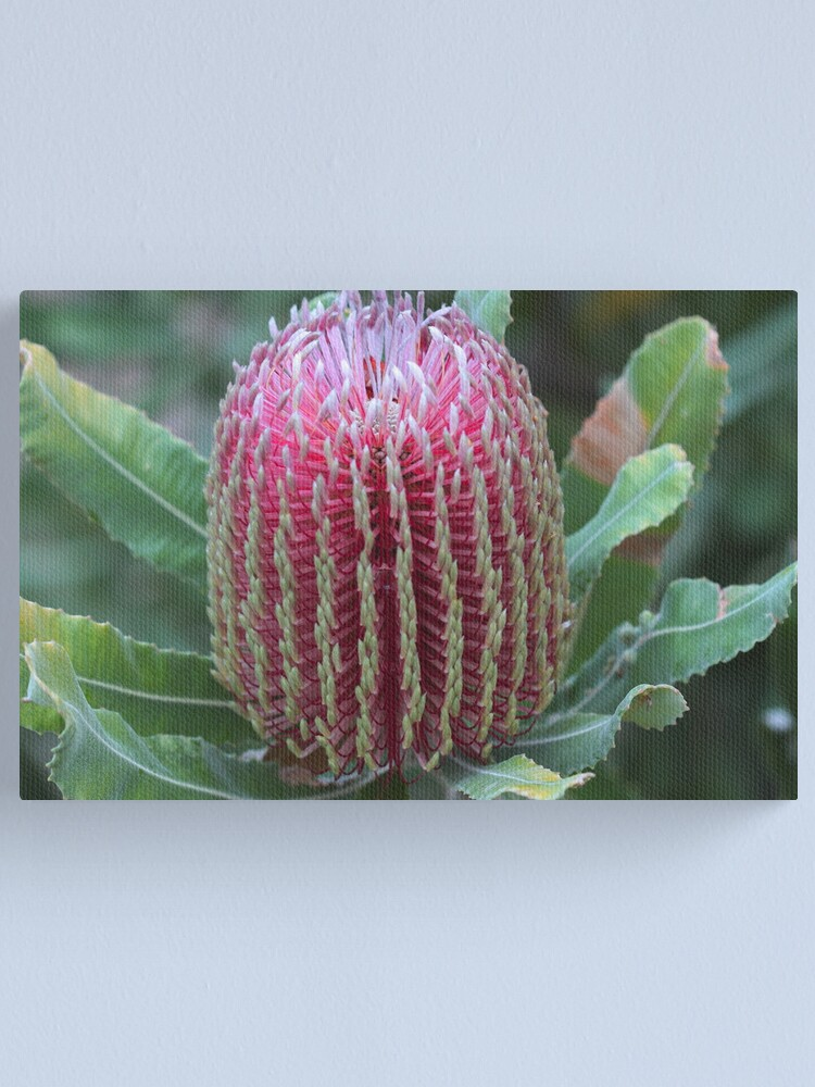 Alternate view of Banksia menziesii Canvas Print