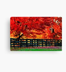 Kentucky Wooden Fence with Maples Canvas Print