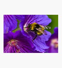 The Bee Photographic Print