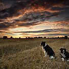 Harvest time Walk with the Dogs by Kathy Wright