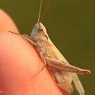 grasshopper on the photographer's fingers by pogomcl
