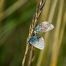 bluebutters by jaffa