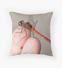 Sympetrum sanguineum, Ruddy Darter brings a  gift to photographer's finger Throw Pillow