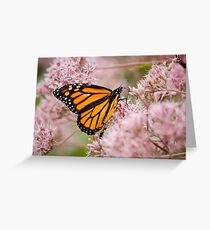 Monarch and Pink Flowers Greeting Card