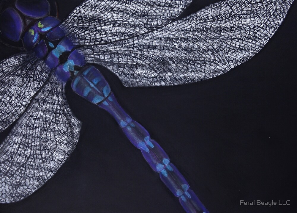 Dragonfly on Black by Feral Beagle LLC
