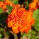 ORANGE FLOWER!  by flyprincess