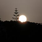 Monkey Tree Sunset by mikequigley