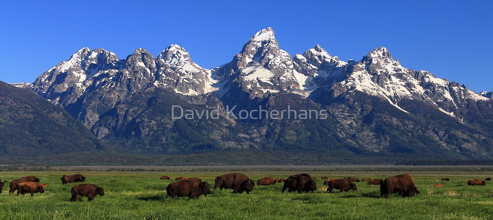 Bison Herd Panorama by David Kocherhans