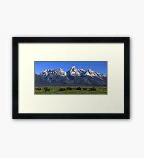 Bison Herd Panorama Framed Print