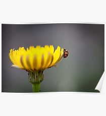 Ladybug on Flower Poster