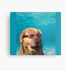 Lámina metálica perro nadador