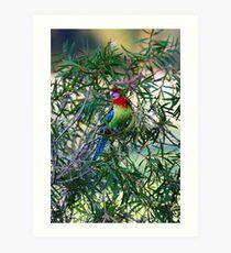 the clour bird Art Print