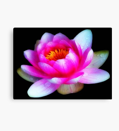 Delicate Beauty ©  Canvas Print