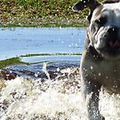 Excited Bulldog in the Water by ChelsiGraphics