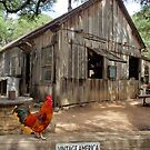 Vintage American rural scene with rooster by ChelsiGraphics