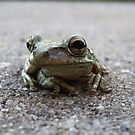 Florida Toad on the road by ChelsiGraphics