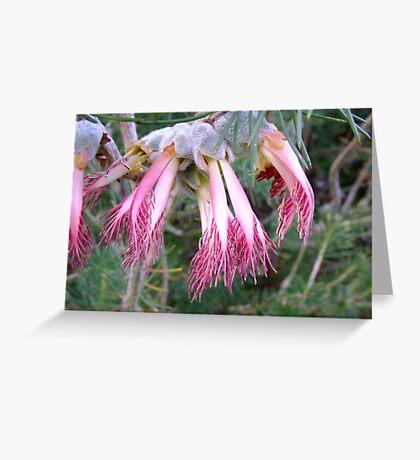 Pink Fingers - Growing wild, Wongan Hills, Western Australia Greeting Card