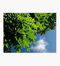 Summer morning sky Photographic Print