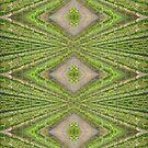 White Vine Design  - Magpie Springs - Adelaide Hills Wine Region - Fleurieu Peninsula by MagpieSprings