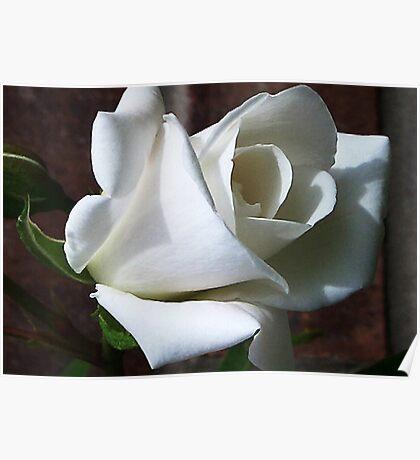 White Rose #2 Poster