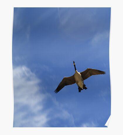 Lone Goose Poster