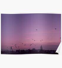flock of birds - sunrise Poster