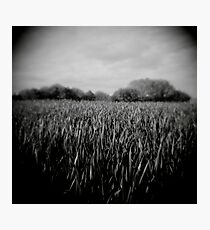 green grass - loupe Photographic Print