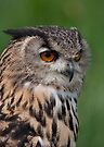 Portrait of an Eagle Owl by Val Saxby
