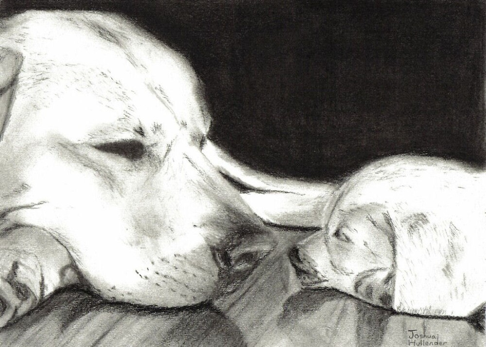 Mother & Child / Dog and Puppy by Drawing
