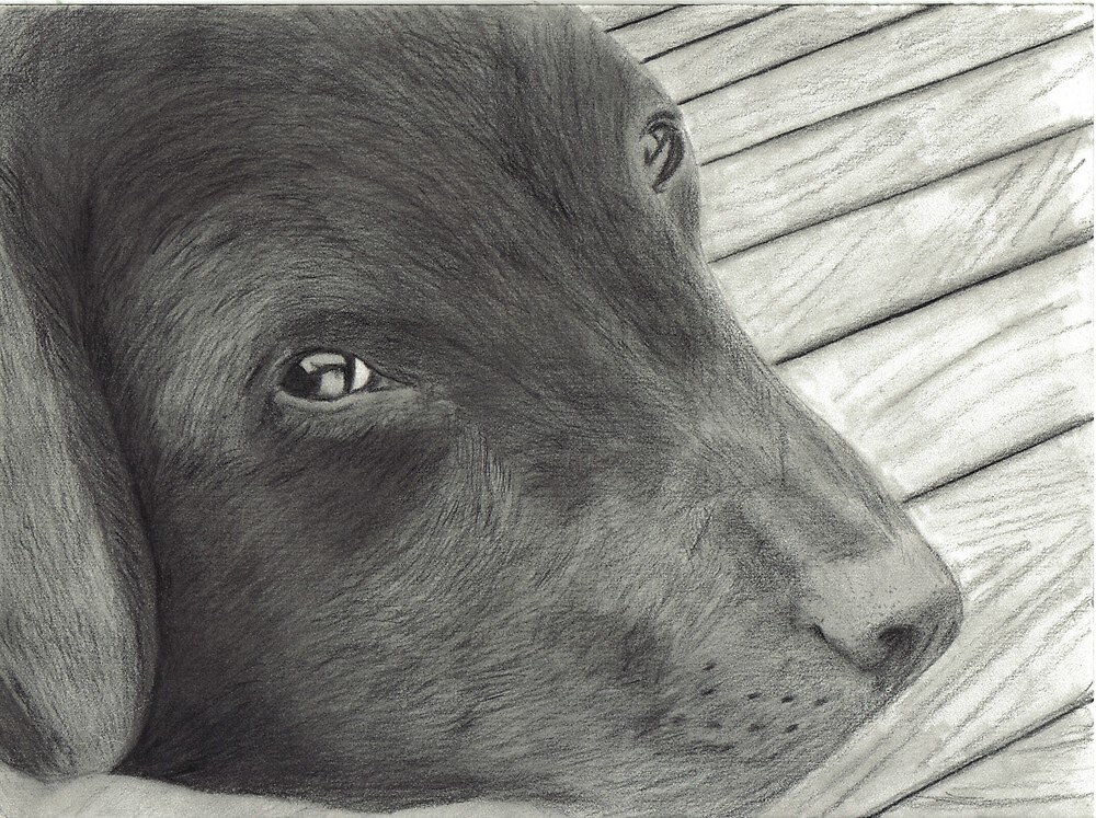 Labrador Resting on Wooden Deck by Drawing