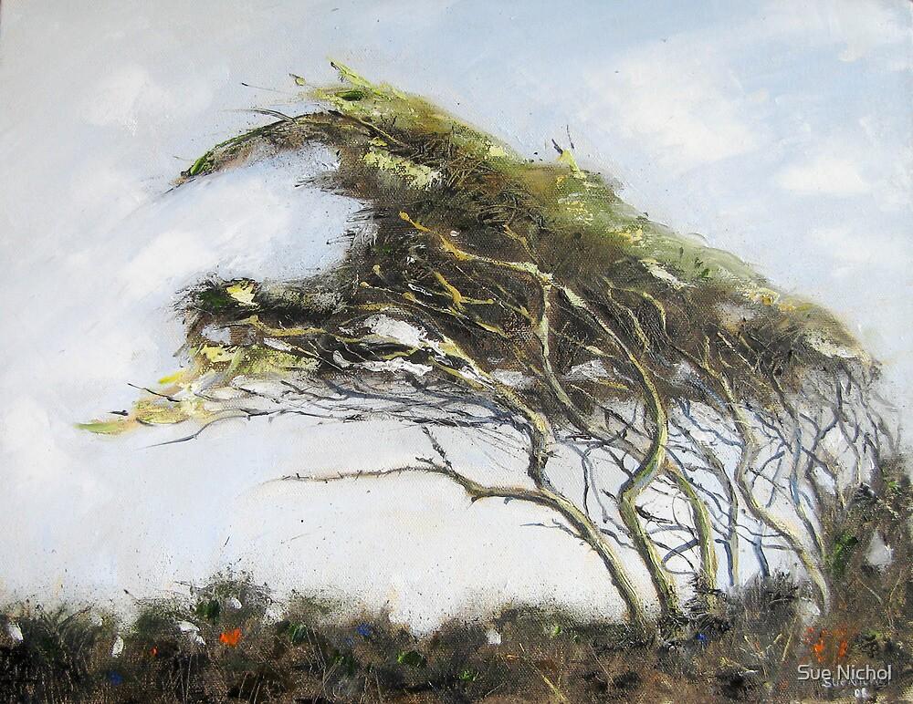 Cornish Hawthorn by Sue Nichol