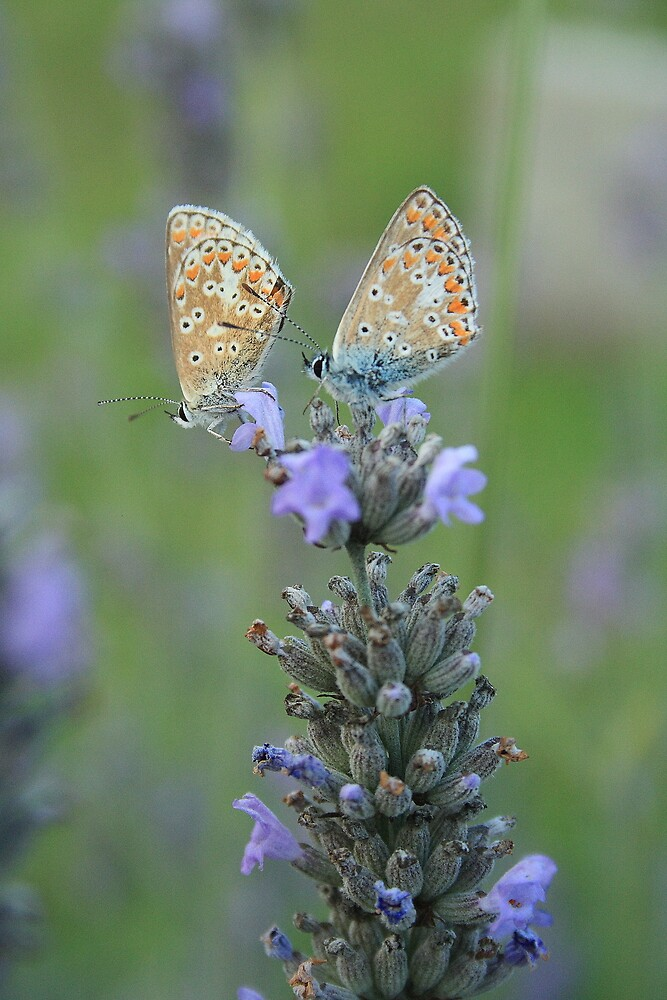 Blue For You by Dave Godden