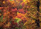 Heart Of Art,  In The Ozark Forest by NatureGreeting Cards ©ccwri