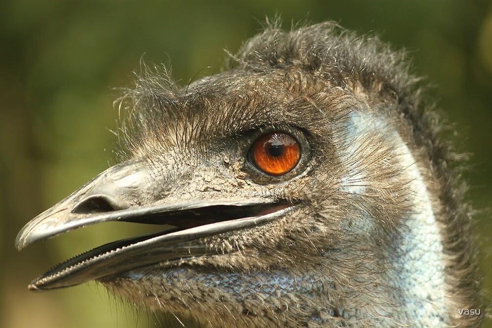 Dirty Emu by vasu