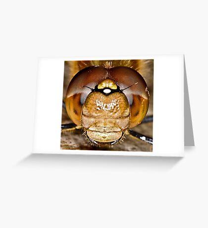 Darter 3 Greeting Card