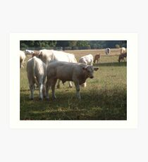 Country Cows Art Print