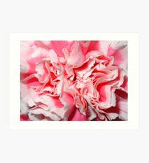 Pink & White Carnation Art Print