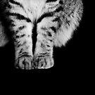Little Tiger by Bec  Brindley
