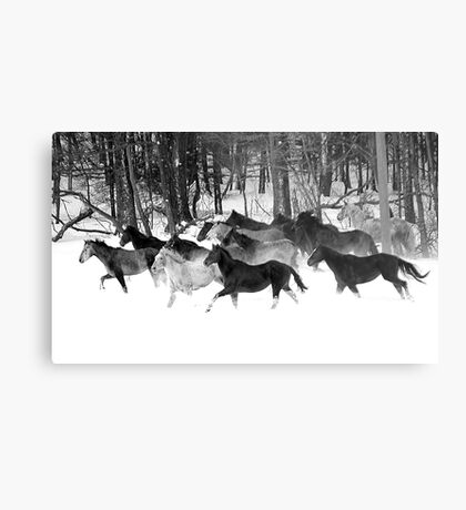After the Blizzard 18 B&W Metal Print
