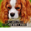 "Funny Dog Shirt, Cocker Spaniel, ""That anti-frizz shampoo didn't work"" by M. I. Speer"