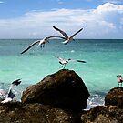 Seagulls in Flight by Earl McCall