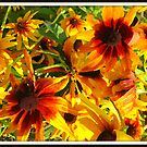 Black Eyed Susan Oil Painting by Debbie Robbins