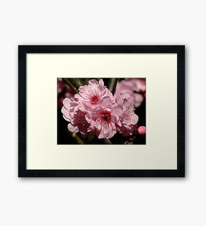 Spring is in the Air! Framed Print